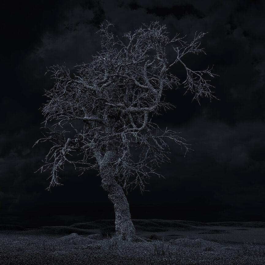Pillars of Dawn / Hanging Tree