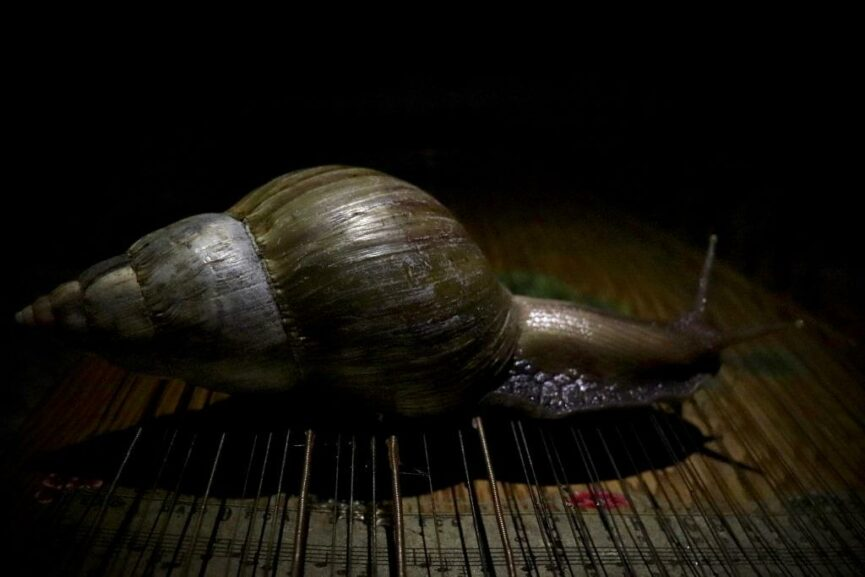 Song of the Mother snail / A Letter To The Woman Masquerading As Me