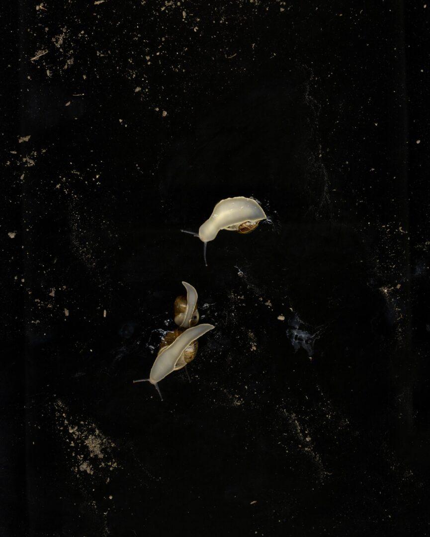 Nadege Meriau / Lydia Unsworth