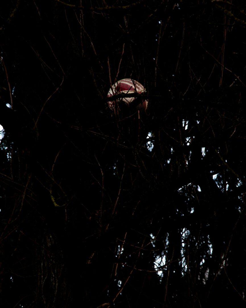 David Copeland / Foy Timms