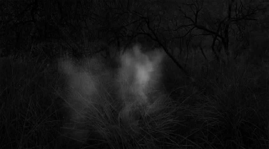Alex Turner / Noah Swinney